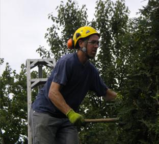 CT Arborist – Russell Andrew
